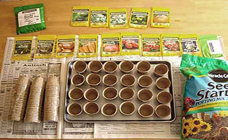 Survival Garden Seed Germination