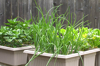 container-gardening-in-open-spaces-around-the-yard