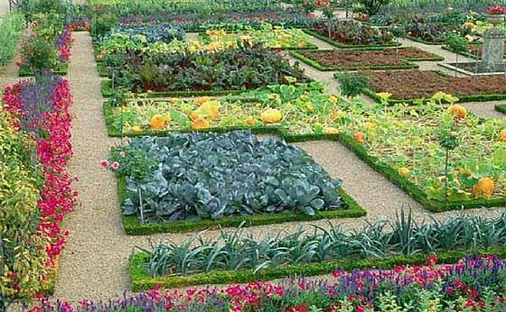planning-your-survival-garden