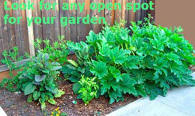 spot-gardening-in-open-spaces-around-the-yard