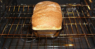 how-to-make-your-own-wheat-bread