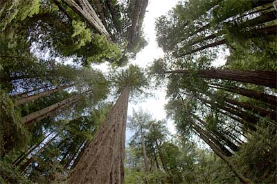 large-trees-near-home-is-risky-business
