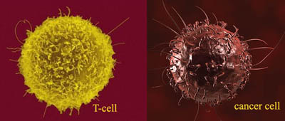 t-cell-cancer-cell