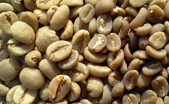 green-coffee-beans-survival-food