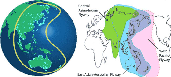 potential-bird-flu-migratory-patterns