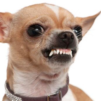 viscous-attack-dog