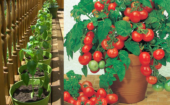 container-garden-on-your-porch