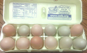 storage-of-fresh-eggs-1