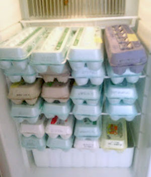 storage-of-fresh-eggs-3