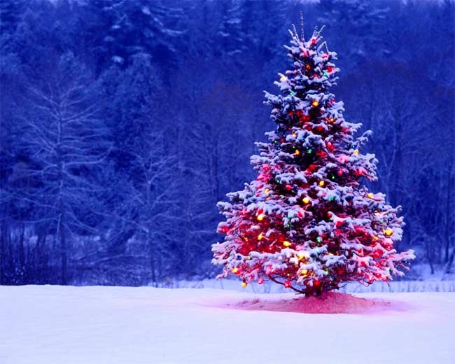 modern-survival-blog-wishes-you-a-merry-christmas