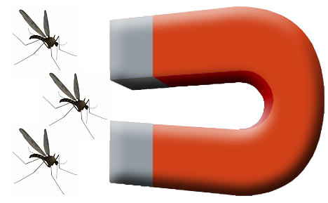 things-that-attract-mosquitoes