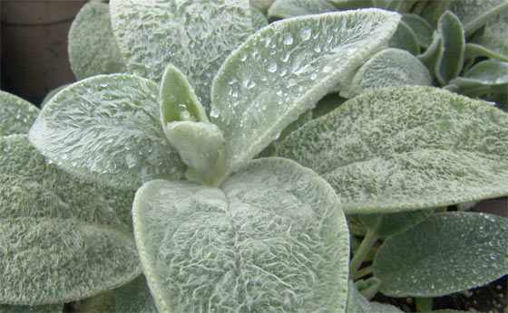lambs-ear-sustainable-toilet-paper