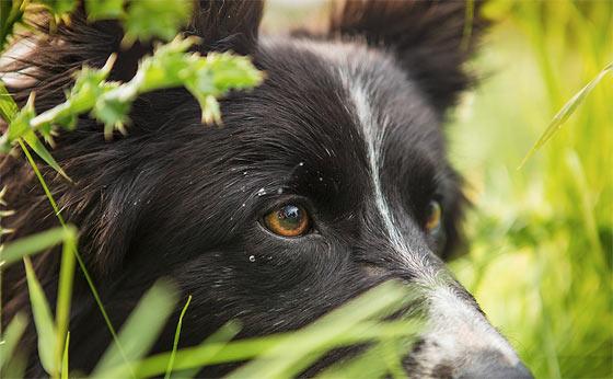 do-not-kick-the-sheepdog