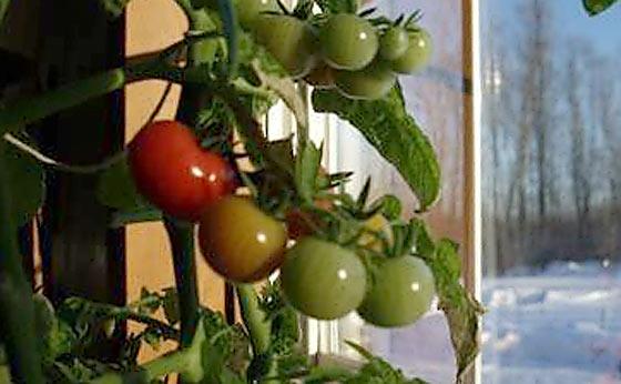 indoor-winter-gardening