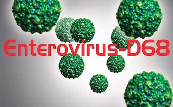 where-does-enterovirus-come-from