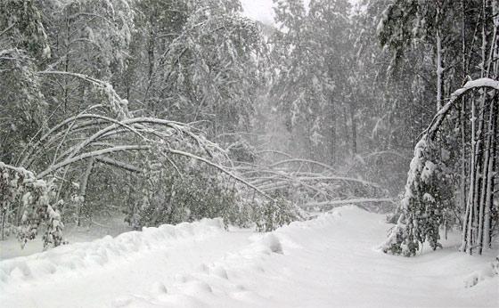prepare-for-a-snowstorm
