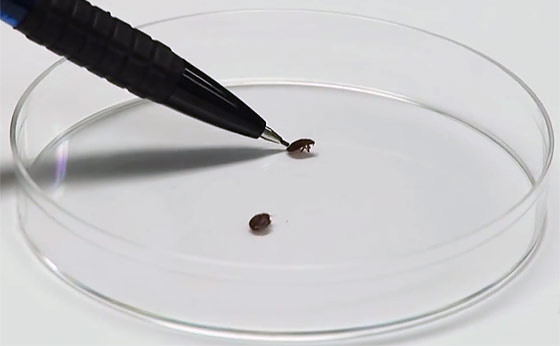 how-to-check-for-bedbugs