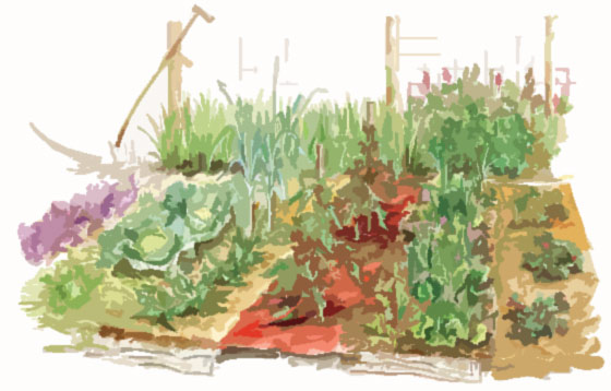 vegetable-garden-list