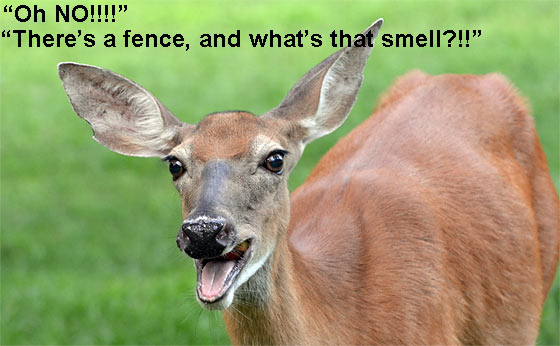 deer-deterrent