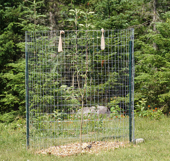 deer-fence-for-apple-tree