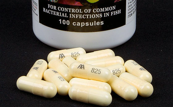Cephalexin for fish same as humans