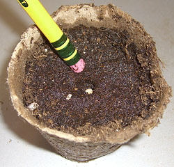 Peat Pot With Seeds