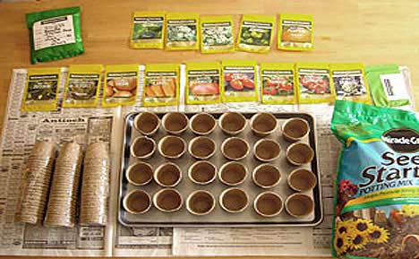 Survival Garden Seed Germination
