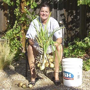 Onions – Easy To Grow and Store