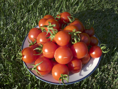 Cherry Tomatoes A Survival Garden Treat