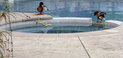 Drinking Swimming Pool Water in an Emergency