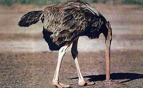Normalcy bias Ostrich effect