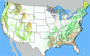forest-coverage-map-united-states