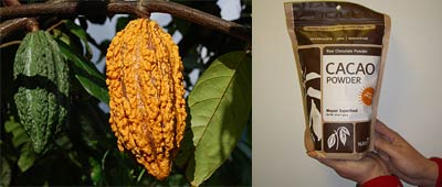 Cacao Powder – A Mayan Super Food Packed With Antioxidants