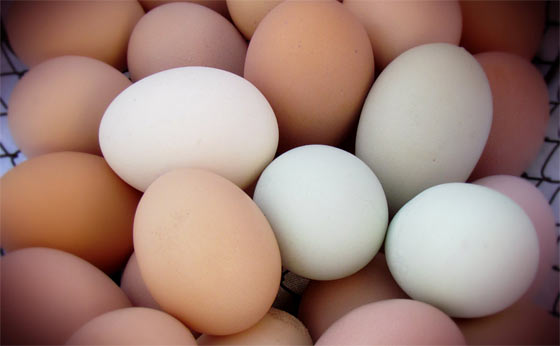 How To Store Eggs For Longer Shelf Life