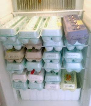 storage-of-fresh-eggs-3