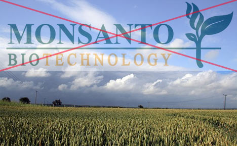 Farmers To Pay Insurance For Monsanto GE Contamination