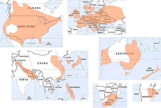 Global Tornado Map
