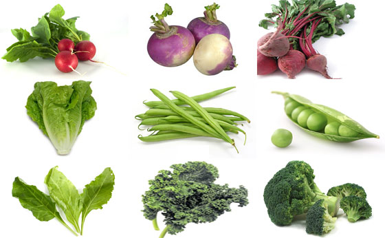 Short List Of Fast Growing Vegetables