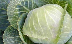 cabbage-extract-DIM-protects-from-radiation-exposure