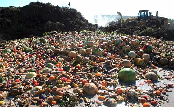 Top 20 Foods Wasted – Thrown In The Garbage