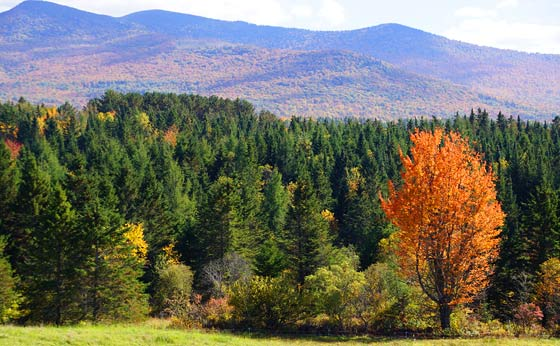 how-to-pick-a-good-campsite