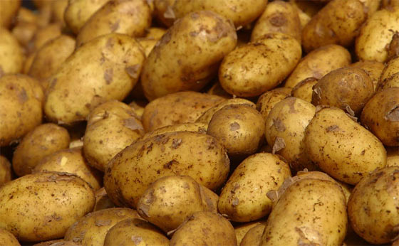 The Potato Is A SHTF Survival Food