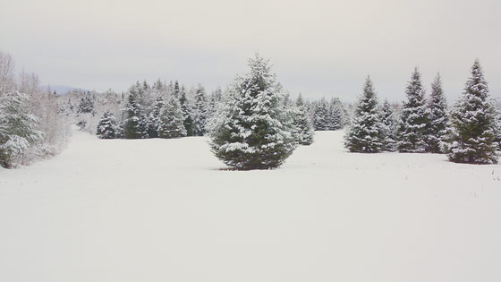 winter-wonderland-1