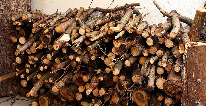 Firewood For Heating – List of the Most Popular Wood for Burning