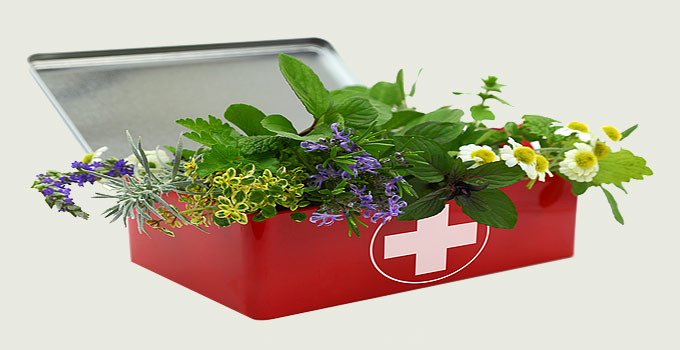 Herbal Medicines for Ongoing Health