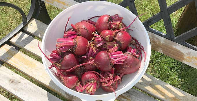 Garden beets in a bowl