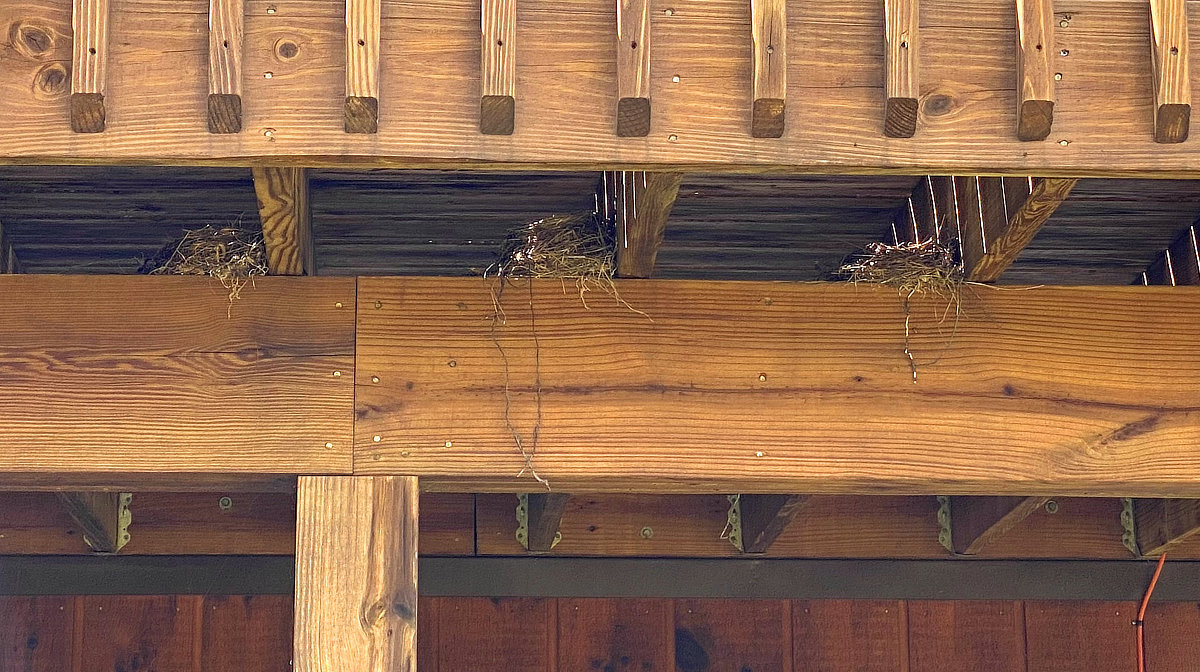 Three birds nests next to each other