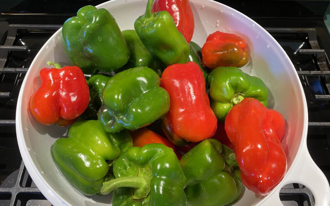 Brandywine Tomatoes, Jalapeno's, and New Ace Bell Pepper Bumper Crop