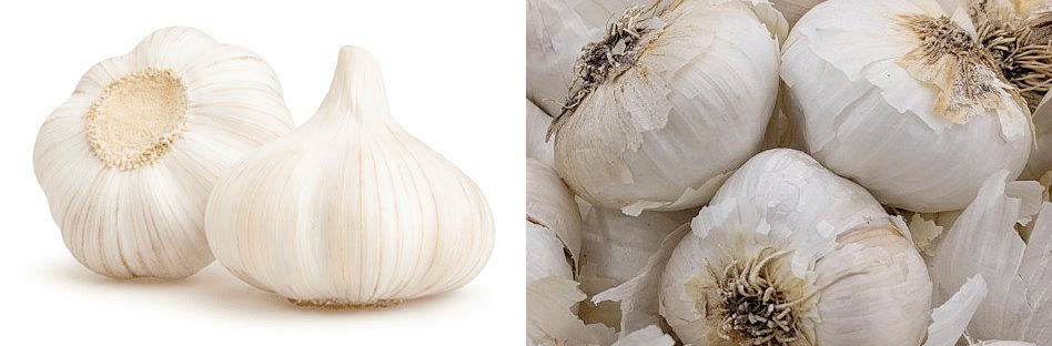 Difference between Chinese garlic and American garlic